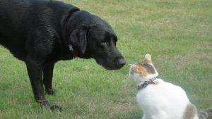 犬と猫の嗅覚