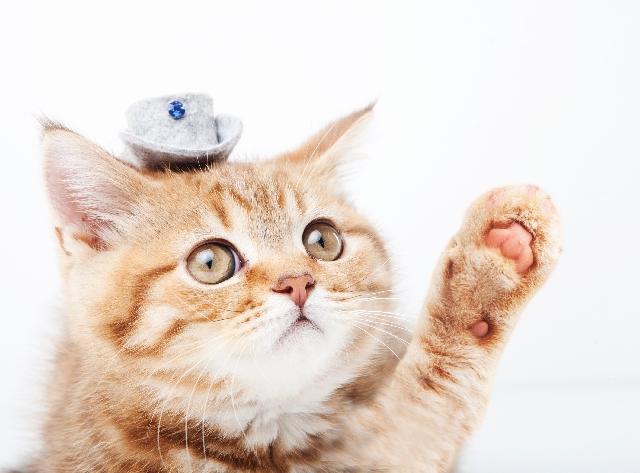 花粉症 猫