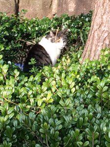 猫 草むら 大井ふ頭