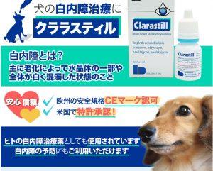 犬 クララスティル