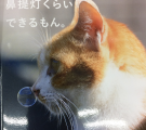 猫も鼻提灯