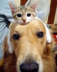 愛猫&愛犬 仲良し
