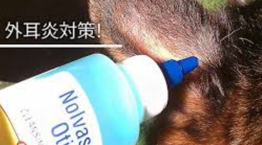 猫 外耳炎