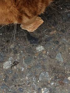 ペルシー猫用ナチュラルおやつセット