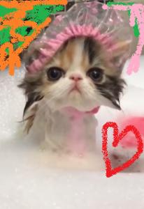 子猫 シャンプ